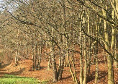 Příroda cestou k Horní přehradě